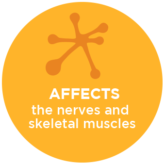 Affects the Nerves and Skeletal Muscles