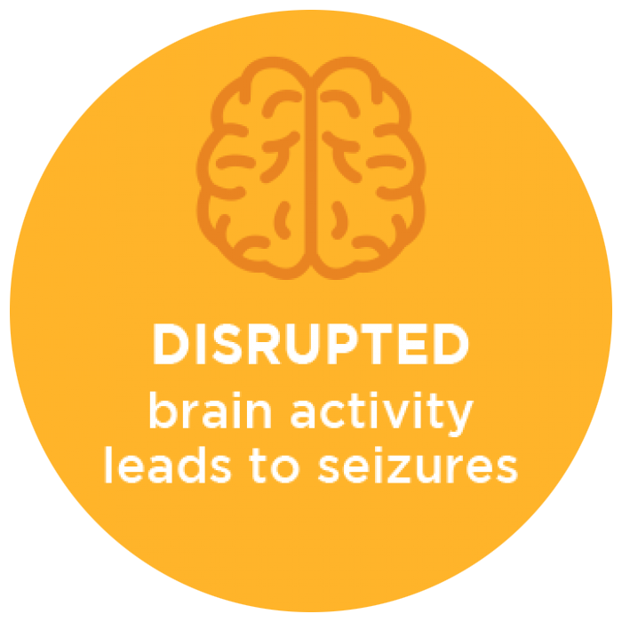 Disrupted Brain Activity Leads to Seizures